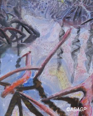 Mangrove (2)